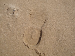 disciples follow the master's footprints